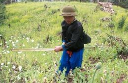 Biên giới Lai Châu 'nói không' với cây thuốc phiện