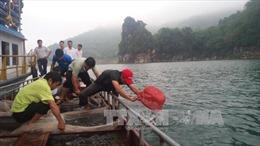 Cán bộ vừa thả cá giống, dân chài đón lõng dùng xung điện vợt