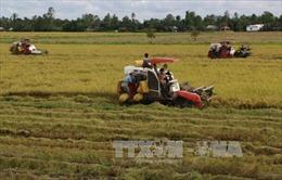 Ngân hàng dành 100.000 tỷ đồng cho thu mua tạm trữ lúa gạo Đông Xuân