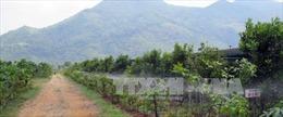500 tỷ đồng giúp Quảng Trị phát triển cây mắc ca