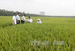 Tìm phương thức ưu việt về tích tụ ruộng đất - Bài 3: Muôn hình muôn vẻ