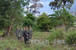 Bốn tháng, phát hiện 60 vụ vi phạm lâm nghiệp ở Vườn quốc gia Phú Quốc