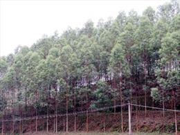 Lạng Sơn: Cần sớm giải quyết vụ tranh chấp đất lâm nghiệp ở Lộc Bình