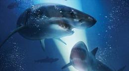 Nghẹt thở với trò chơi tử thần 'ngắm cá mập' trong '47 Meters Down'