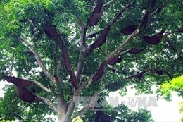 Bảo tồn đa dạng sinh học tại tỉnh Điện Biên