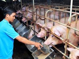 Bất cập 80% thịt lợn tiêu thụ qua thương lái, chợ truyền thống