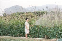 Agribank Sông Mã giúp nông dân làm giàu