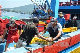 Bình Định: Cần đầu tư nâng cấp mở rộng Cảng cá Tam Quan