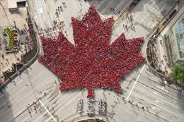 Người Canada xếp lá phong khổng lồ nhân 150 năm Quốc khánh