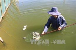 Chưa xử lý dứt điểm ô nhiễm, cá tiếp tục chết ở Đầm Dơi