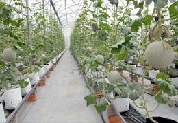 Nghịch lý: Có tài sản nhưng không vay được vốn để đầu tư nông nghiệp