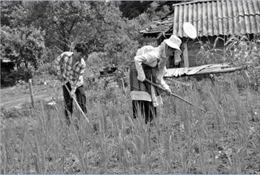 Chọn cây trồng hiệu quả trên đất dốc