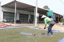 Hồ tiêu Việt Nam 'cầm trịch' trên sân chơi thế giới