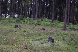 Chấm dứt việc xây dựng trái phép ở khu vực đồi Thiên An (Thừa Thiên - Huế)