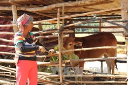 Hỗ trợ đồng bào dân tộc tái định cư xóa đói, giảm nghèo