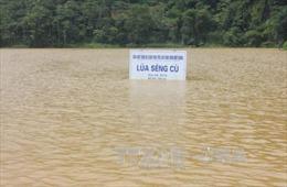 Lào Cai có mưa to, lũ các sông dâng cao