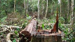 Đắk Nông thu hồi dự án khu du lịch sinh thái thác Lưu Ly