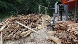 Tây Nguyên quy hoạch lại các cơ sở chế biến gỗ