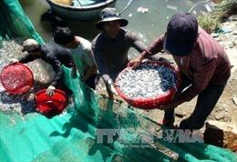 Khánh Hòa đào tạo nghề cho 4.200 ngư dân
