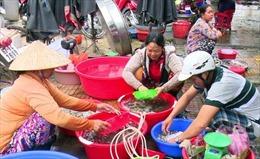 Nước lũ về Đồng Tháp Mười, giá cá linh đầu mùa cao kỷ lục