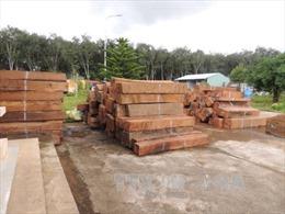 Cất giữ và vận chuyển trái phép hàng chục cây gỗ Giáng Hương