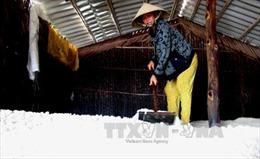 Diêm dân Bến Tre găm muối chờ giá tăng thêm