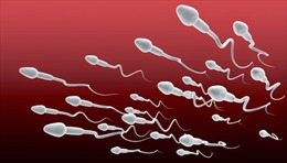 Lượng tinh trùng giảm, loài người đối mặt với nguy cơ tuyệt chủng?