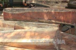 Vận chuyển gỗ tang vật, kéo thêm gần 85 m3 gỗ không rõ nguồn gốc