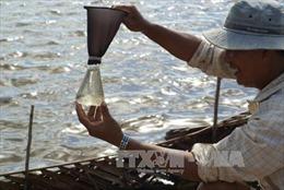 Nuôi artemia cho hiệu quả kinh tế cao