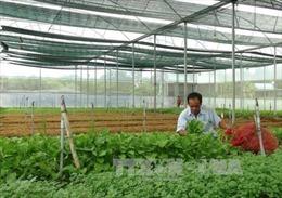 Lúng túng cho vay gói 100.000 tỷ đồng sản xuất nông nghiệp công nghệ cao