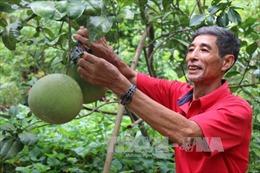 Phát triển cây ăn quả bền vững khu vực Nam bộ