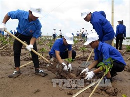 Trồng rừng ngập mặn: Giảm thiểu rủi ro thảm họa thiên tai