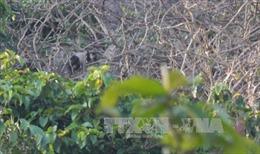 Đồng Nai bảo vệ đàn voọc trên núi Chứa Chan