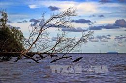 Nguyên nhân ban đầu của sự cố sụt lún nghiêm trọng tại tuyến đê biển Tây