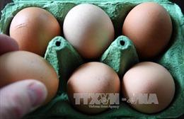 Bê bối trứng nhiễm thuốc trừ sâu lan rộng tại châu Âu