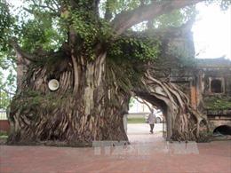 Bảo tồn, vinh danh cây di sản - cùng chung tay bảo tồn đa dạng sinh học
