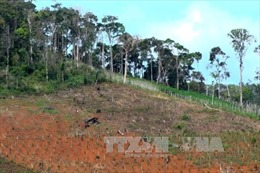 Cà Mau: Bồi hoàn hơn 4 tỷ đồng cho các hộ dân vì thu hồi đất sai