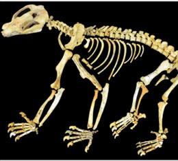 Phát hiện hóa thạch của con lười khổng lồ tại Mexico