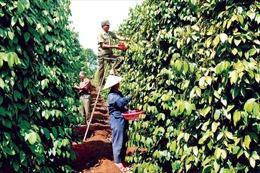 Thông tin thiếu kiểm chứng có thể làm hại nông dân