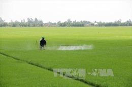 Kiên Giang bảo vệ sản xuất lúa trước mùa lũ