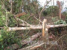 Đắk Nông xử lý nghiêm nhiều đối tượng phá rừng phòng hộ