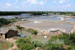 Triển vọng nuôi tôm siêu thâm canh tại Cà Mau