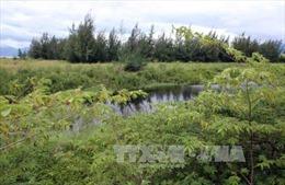Bà Rịa-Vũng Tàu đề xuất thu hồi các dự án chậm triển khai