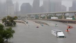 Nữ phóng viên nhanh trí cứu tài xế mắc kẹt trong dòng nước lũ ở Houston