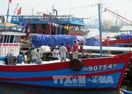 Tàu 67 trúng mực ở ngư trường Hoàng Sa truyền thống