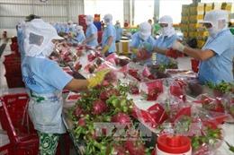 Tháo gỡ vướng mắc trong hợp tác thương mại giữa Việt Nam và Ấn Độ