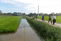Lúa hữu cơ sinh học được bao tiêu giá từ 150 - 180% so với lúa thường