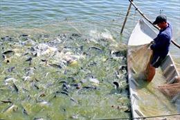 Đẩy mạnh tiêu thụ cá tra tại thị trường trong nước