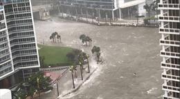 Siêu bão Irma xâm chiếm Florida, Miami bị nước biển nhấn chìm