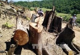 Khởi tố vụ án hình sự phá trắng hơn 44 ha rừng tự nhiên tại Bình Định